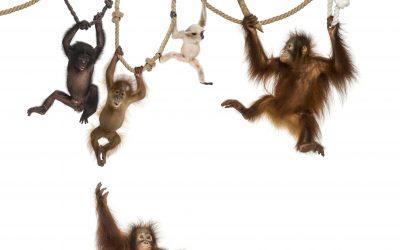 Don't take the monkey